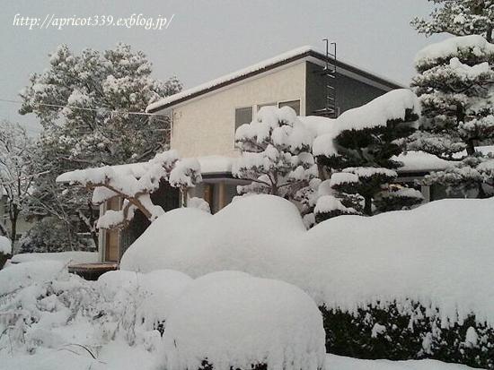 冬のリビングインテリア_c0293787_17414662.jpg