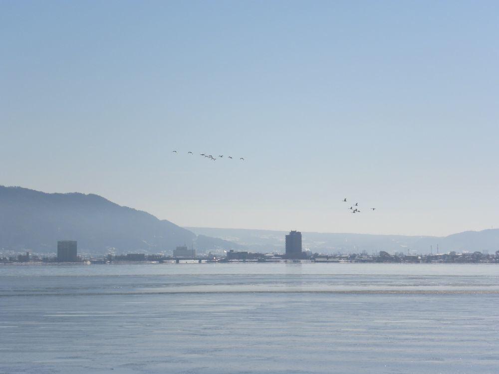 冬の風物詩・白鳥の飛来_b0329588_10151410.jpg