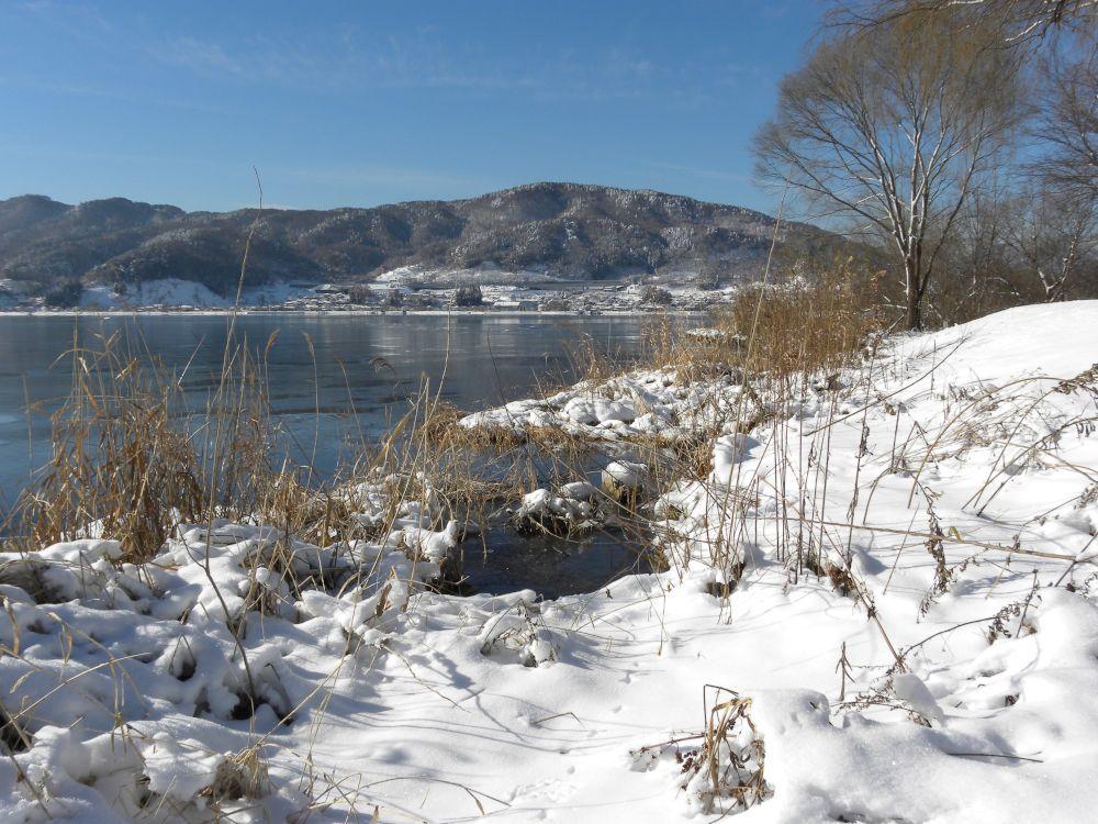 冬の風物詩・白鳥の飛来_b0329588_10154930.jpg
