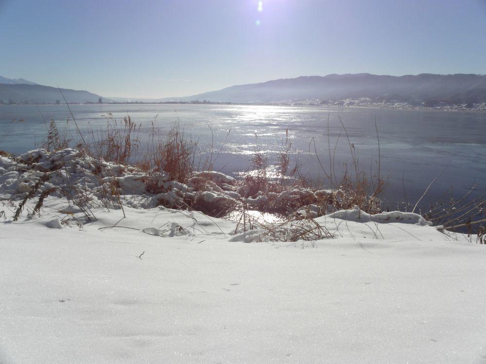 冬の風物詩・白鳥の飛来_b0329588_10155549.jpg