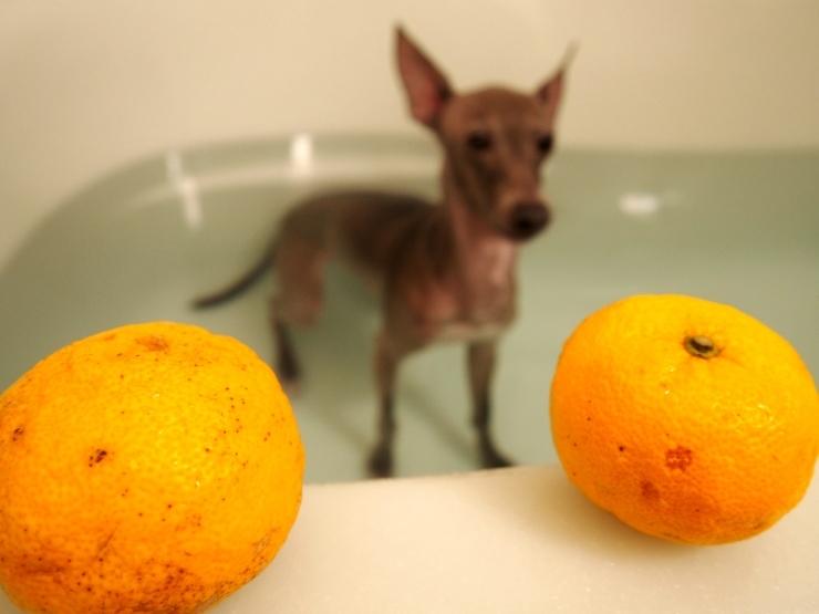 一緒に 柚子湯つかったよ!_f0249710_00340070.jpg