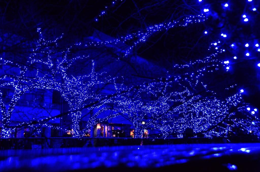 青の洞窟でメリークリスマス♪_d0065116_19575582.jpg
