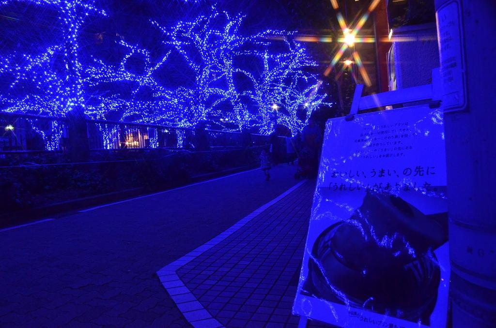 青の洞窟でメリークリスマス♪_d0065116_2005252.jpg