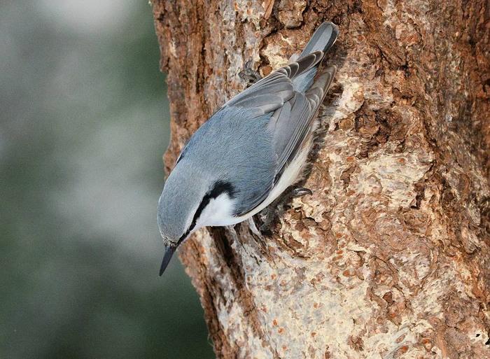 北の森からエゾリスと野鳥便り _d0098721_17292332.jpg