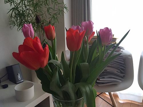 Tulipa pulchella_d0248537_12202498.jpg