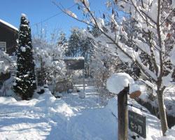 雪国だったのね・・・_d0050155_9591786.jpg