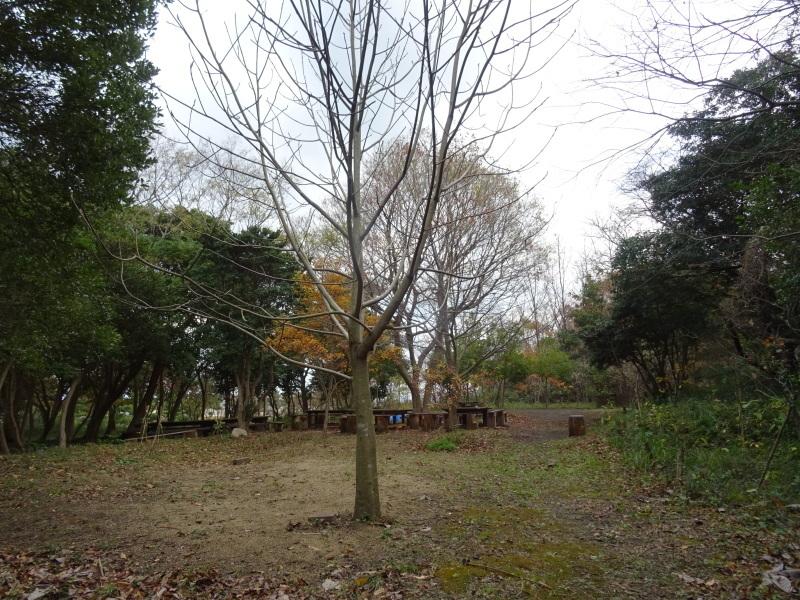 「とんど」用つる採集  in  せんなん里海公園内     by     (TATE-misaki)_c0108460_18254989.jpg