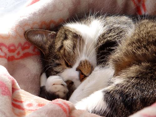 猫部屋の多肉植物。オキザリス・桃の輝きなど_a0136293_17295836.jpg