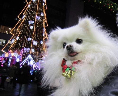ちょっとクリスマス気分♪_b0177436_10111671.jpg
