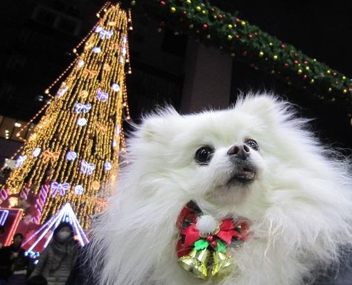 ちょっとクリスマス気分♪_b0177436_1021852.jpg