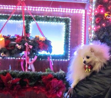 ちょっとクリスマス気分♪_b0177436_1031716.jpg