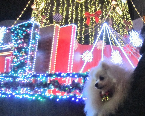ちょっとクリスマス気分♪_b0177436_9382830.jpg