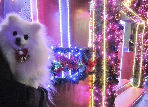 ちょっとクリスマス気分♪_b0177436_938506.jpg