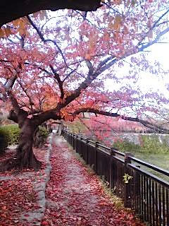 関西ツアー&12/3ストーミー!!!_d0124753_20502377.jpg