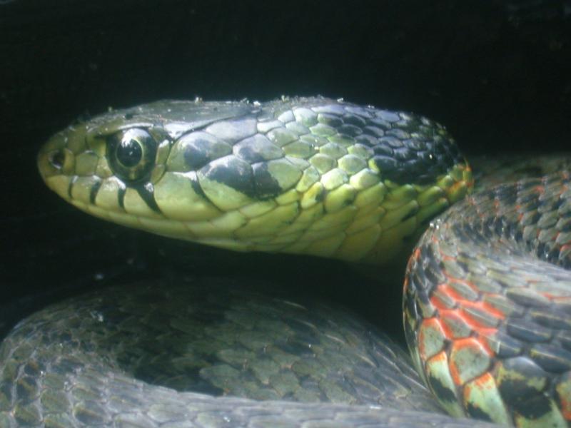 「遠野物語拾遺180(侵入する蛇)」_f0075075_16394992.jpg