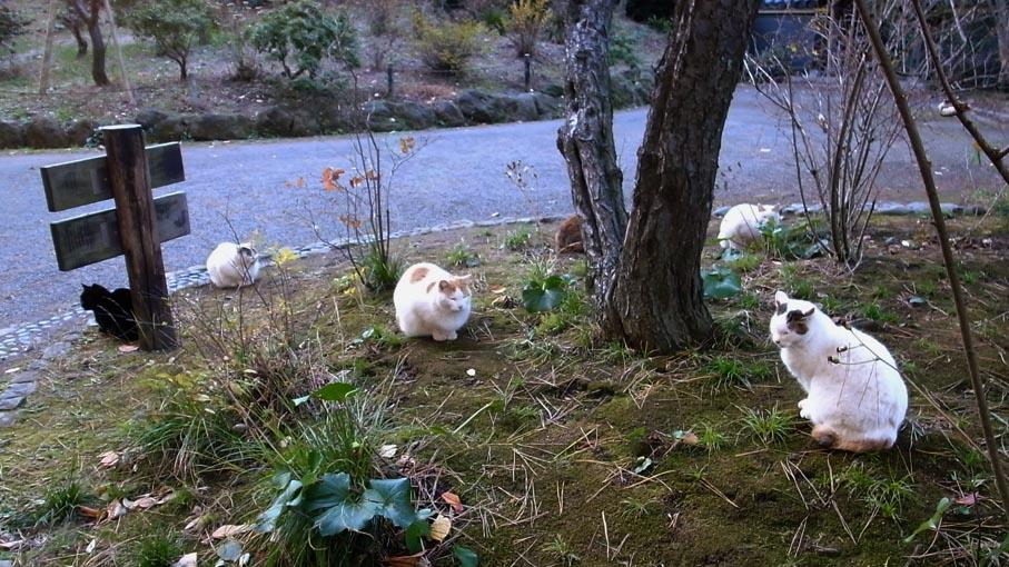 猫がたくさん_b0061387_13251536.jpg