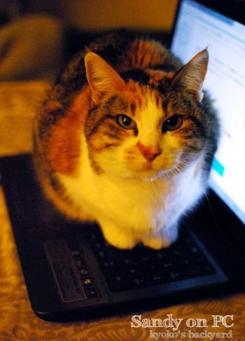 PCの上にSandyが乗ったら_b0253205_04240579.jpg