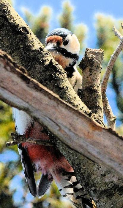 北の森からエゾリスと野鳥便り _d0098721_1812387.jpg