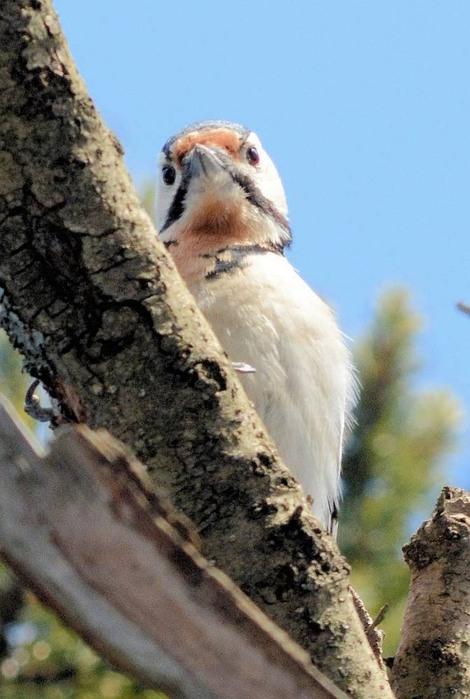 北の森からエゾリスと野鳥便り _d0098721_18124659.jpg