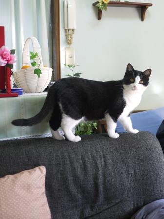 猫のお友だち ハナちゃん編。_a0143140_21104617.jpg