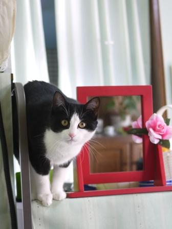 猫のお友だち ハナちゃん編。_a0143140_218920.jpg