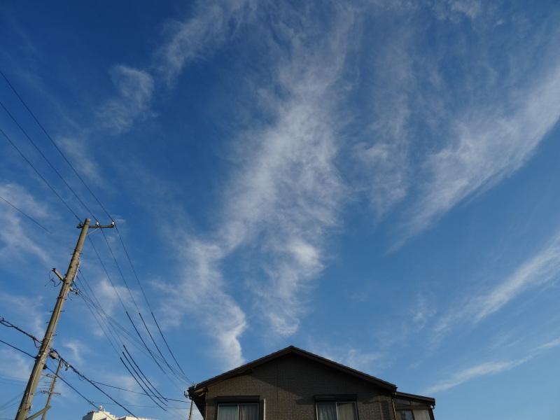 寒くなければ お外作業     by     (TATE-misaki)_c0108460_17342377.jpg