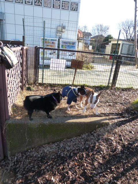 マイペースな犬はドッグランで休む_b0349589_1435883.jpg