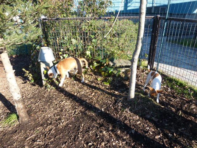 マイペースな犬はドッグランで休む_b0349589_1436565.jpg
