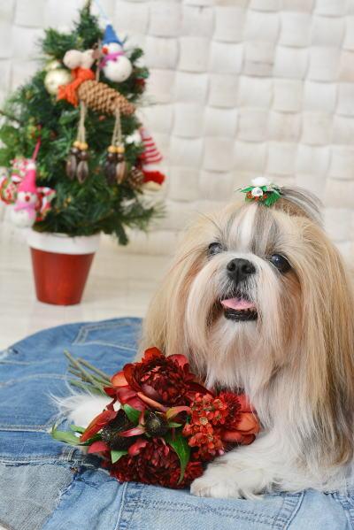 楽しいクリスマスを_c0090198_2304479.jpg