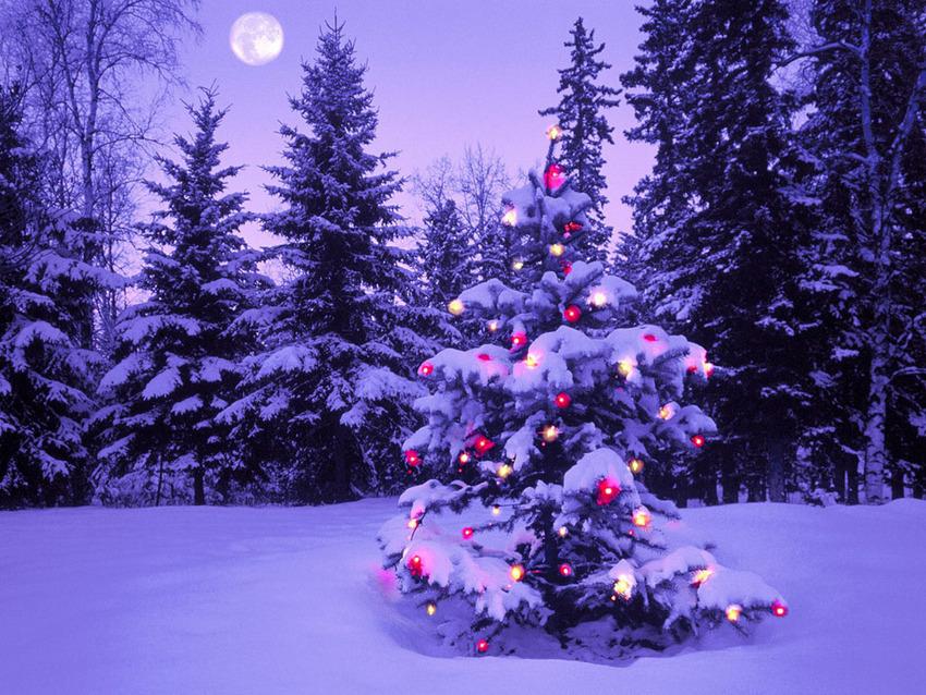 メリークリスマス^^_e0243413_16331146.jpg