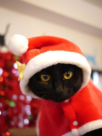 クリスマスイヴ猫 てぃぁら編。_a0143140_12425782.jpg
