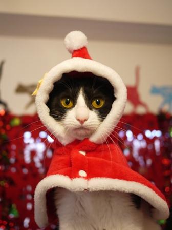 クリスマスイヴ猫 みるきぃ編。_a0143140_221912.jpg
