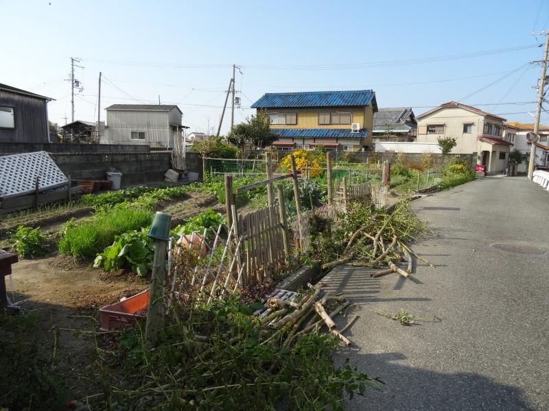 皇帝ダリアさん 長い間ありがとう     by     (TATE-misaki)_c0108460_16100272.jpg