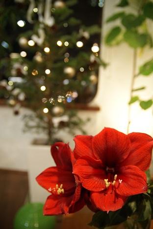 メリークリスマス_f0202682_187932.jpg