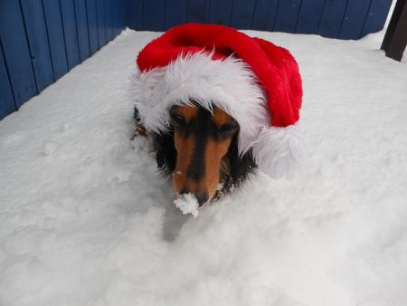 Merry Christmas_b0186183_100594.jpg