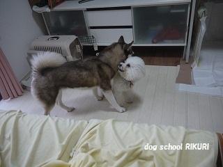 RIKURI幼稚園 ~ フランちゃん ~_a0284100_12383317.jpg