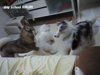 RIKURI幼稚園 ~ フランちゃん ~_a0284100_12384563.jpg