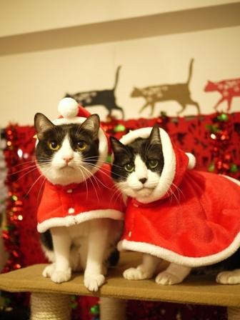 17歳のクリスマス猫 空みるきぃ編。_a0143140_2244019.jpg