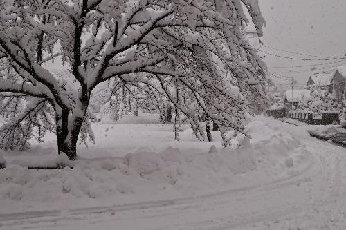 雪が降りました!_e0266363_16234379.jpg