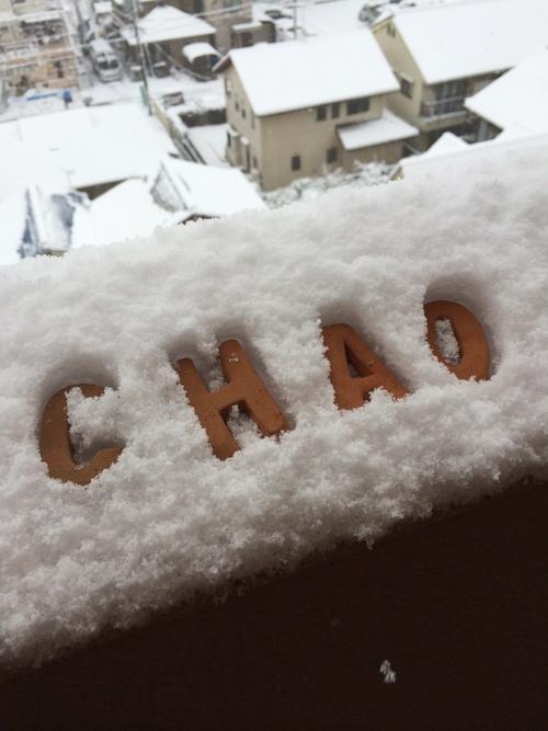 雪の散歩道_e0158970_1992165.jpg