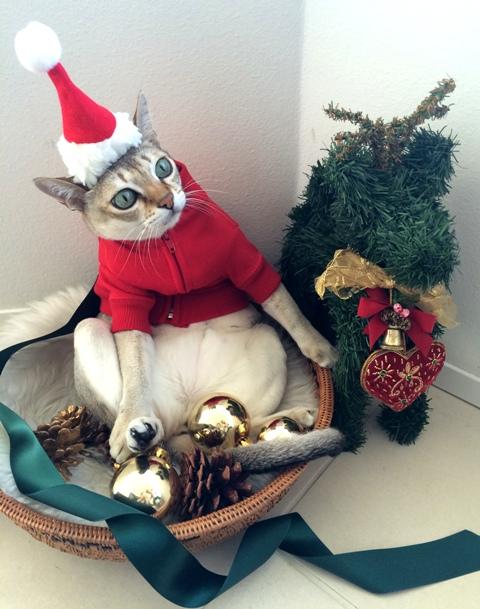 Wish you a Merry Christmas!!  _a0138976_1823118.jpg