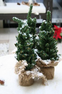 12月クリスマスレッスン_a0273699_1333476.jpg