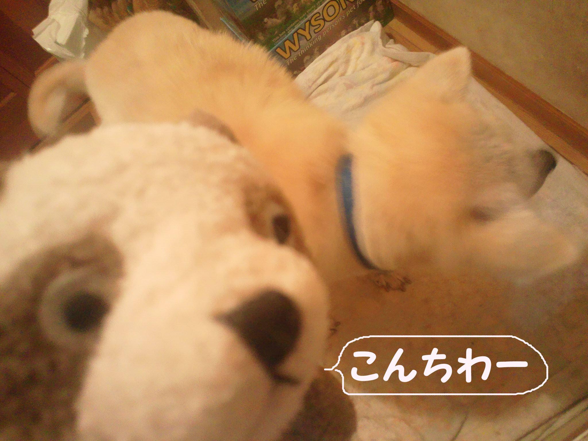 プレゼント for あおば!_f0242002_1301250.jpg