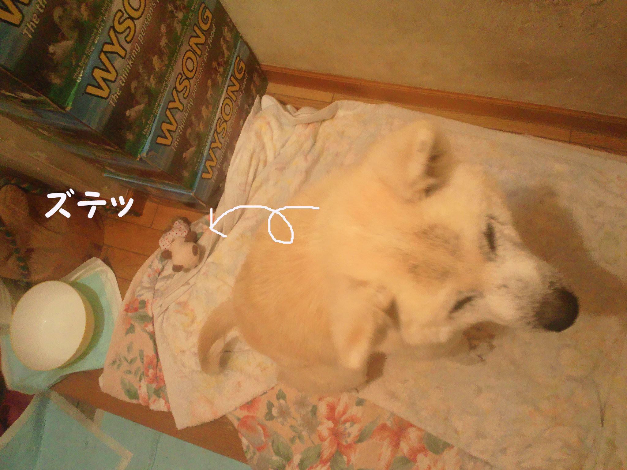 プレゼント for あおば!_f0242002_1342052.jpg