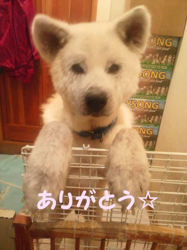 プレゼント for あおば!_f0242002_1445883.jpg
