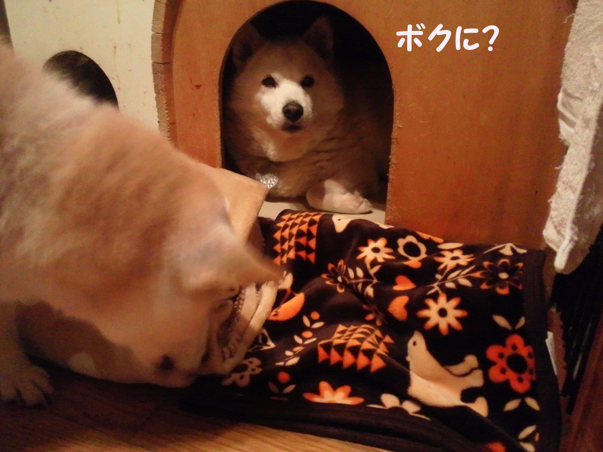 プレゼント for こしろう!_f0242002_1815895.jpg