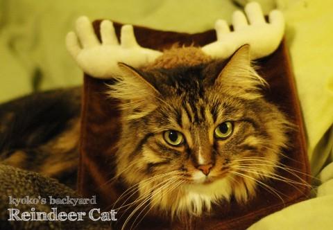 我が家のトナカイ猫_b0253205_10345815.jpg