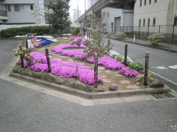 わが町自慢の花壇 阿部 雅之さん 中原区役所前南武線ガード下で撮影