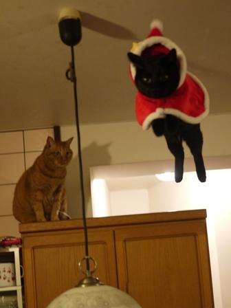 空飛ぶクリスマス猫 しぇるてぃぁら編。_a0143140_115628.jpg
