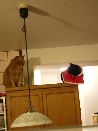 空飛ぶクリスマス猫 しぇるてぃぁら編。_a0143140_1264393.jpg